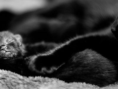 Newborn kittens…