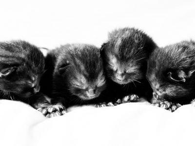 Day 8… kittens